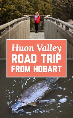 I recently revisited this area after more than a decade and was super impressed by how much it has to offer travellers from interstate or abroad. If you'll be visiting Hobart and are looking for an outing that will let you experience some of the best parts of Tassie in a day, here's my recommended itinerary for a Tahune Airwalk and Huon Valley road trip from Hobart! | A Globe Well Travelled Valley Road, Airwalk, A Decade, Day Trip, Wander, Globe, Wellness, Travel, Posts