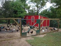 http://www.backyardchickens.com/forum/uploads/18120_peachicks_and_ducks_and_coop_047.jpg