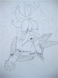 Hummingbirds in Flight…Painting the Magic. Bird Sketch, Flower Sketches, Drawing Sketches, Bird Drawings, Animal Drawings, Colouring Pages, Coloring Books, Painting & Drawing, Watercolor Paintings