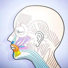 小顔のポイントは「顔筋」と「舌」にあった!「舌トレ」とは、顔筋ストレッチで顔の皮膚表面にある表層筋を強化、舌を動かす舌骨筋トレーニングで深層筋を強化して、肌を内側と外側から鍛え、余分な脂肪と老廃物を流