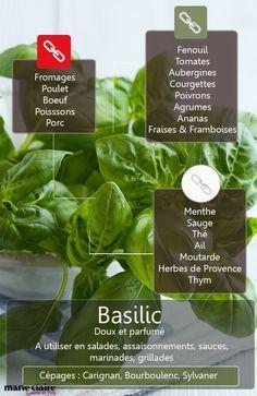 Les ingrédients les plus harmonieux avec le basilic