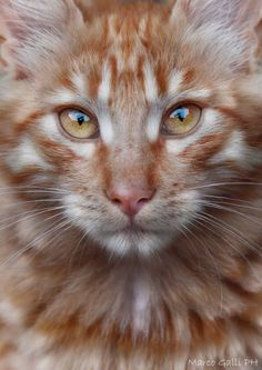 Pretty kitty! Not mine but I do have an orange one.