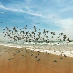 Wir sind viel zu selten am Meer  ..... . . . . . #travel #lissabon #lisboa #lisbon #sky #sun #springbreak #happyday #picoftheday #spaziergang #shadow #spring #beach #strand #birds #vogel #möve #himmel #meer #salzluft #happiness #freedom #freiheit #glücklich #glück