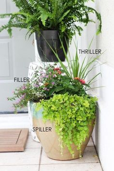 Summer Flower Pots that will Thrive - Within the Grove Use the thriller, filler, and spiller method when planting in pots for a gorgeous finished look.Use the thriller, filler, and spiller method when planting in pots for a gorgeous finished look. Potted Plants Patio, Outdoor Planters, Fall Planters, Plants In Pots, Plants For Porch, Potted Plants Full Sun, Planters For Front Porch, Full Sun Container Plants, Cheap Planters