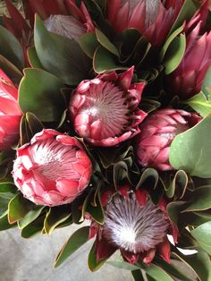 Protea 'Madlba'...Sold in bunches of 10 stems from the Flowermonger the wholesale floral home delivery service.