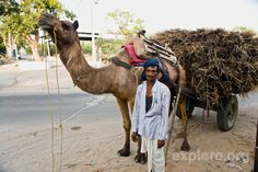 Man With His Camel, Jaipur Photo