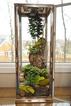 Fensterbank Deko - In einer Laterne ein Terrarium gestalten