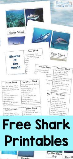 Free Shark Activities and Shark Printables.for Kids, Lots of Shark Week Activities for Kids, Plus, Shark Science, Shark Lesson Plans and Fun Shark Themed Preschool ideas #sharks #sharkactivities #sharkweek #sharktheme #sharkprintables Shark, Sharks