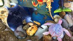 Sea Creatures For Kids MUD Bathing  Learn sea animals