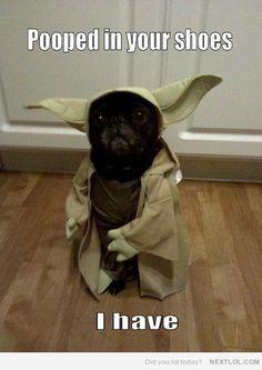 i bet you did puppy yoda