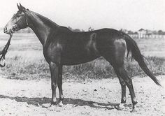 porta, 1931, poland. dam of forta. lost in WWII. both boys trace back to her through czort.