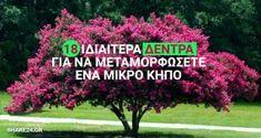 18 Ιδιαίτερα Δέντρα για να Μεταμορφώσετε Ευχάριστα έναν Μικρό Κήπο & την Αυλή Σας ! Vegetable Garden Design, Outdoor Landscaping, Better Homes, Agriculture, Garden Plants, Home And Garden, Backyard, Landscape, Flowers