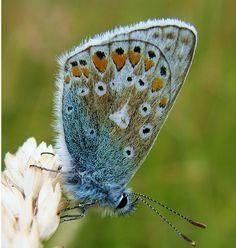 ~blue butterfly~