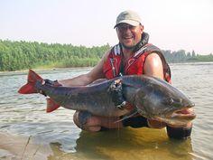 Taimen fishing in Siberia. What a fish!