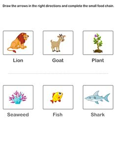 Worksheets Food Webs For Kids Worksheets food chains worksheets worksheet workbook site chain for kids free educational kids