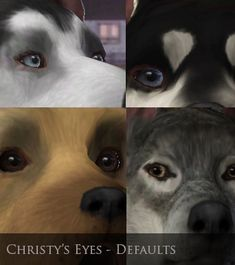Mod The Sims - Christy's Eyes - Default Dog eyes. Dog Eyes, Puppy Eyes, Sims Pets, Sims 3 Cc Finds, Taemin, Sims 4, Dogs And Puppies, Fandoms, Content