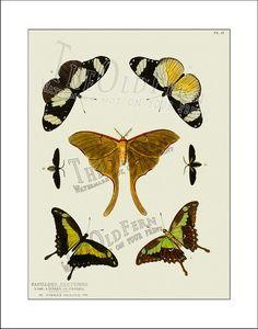 Butterfly+Print+06+Butterflies+Antique+Vintage+by+TheOldFern,+$12.00