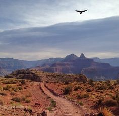 South Kaibab Trail follows a ridge to Skeleton Point and has 360 degree views of the canyon