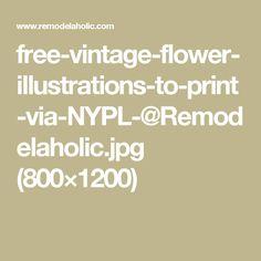 free-vintage-flower-illustrations-to-print-via-NYPL-@Remodelaholic.jpg (800×1200)