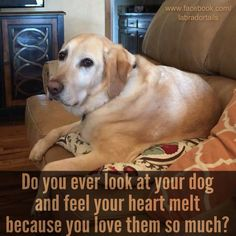 All the time....and our kitties.  I tend to cry because there is nothing but pure love looking back each time.
