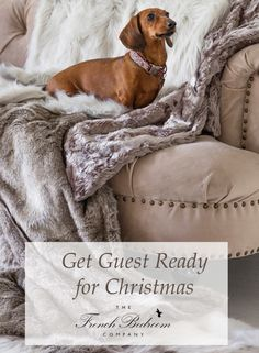 The French Bedroom Company | Get Guest Ready for Christmas over on the blog. Top Tips on organising your home for the festive season - not just christmas decorations, but thinking of chairs, spare bedroom ideas and inspiration for visiting pets. Pink velvet sofa with faux fur throws and cute mini daschund