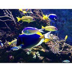 """""""""""Zio perché i pesci sono muti?"""". """"Prova tu a parlare con l'acqua in bocca."""" #acquariodilivorno"""" Photo taken by @sedeluca on Instagram, pinned via the InstaPin iOS App! http://www.instapinapp.com (10/11/2015)"""