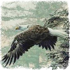 Spirit of Bald Eagle Role: Illuminating Force Lesson: Soar Above Element: Air/Water Wind: East Illumination Medicine: Connection to Grandfather Sky Keywords: Illumination. Ability to See. Keen Sight.