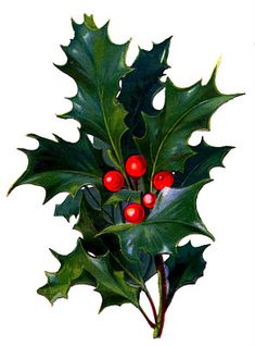 Victorian Christmas Clip Art – Holly with Bright Red Berries