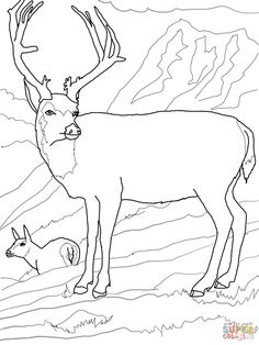 forestanimalscoloringpages Moose Free Animal Coloring