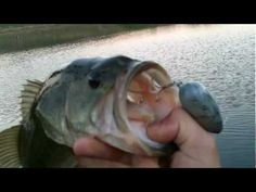 Big Surprise Bass on Spaz the Mouse - Topwater Largemouth