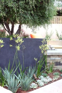 Dianella revoluta 'Baby Bliss' -with yellow Kangaroo paws. Kangaroo Paws look great in front of wall except they're too tall. Australian Native Garden, Australian Plants, Kangaroo Paw Plant, Garden Design, Landscape Design, Coastal Gardens, Pallets Garden, Succulents Garden, Dream Garden