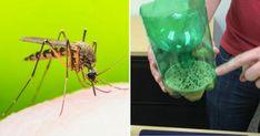 Bliv myggene kvit til sommer – genial fælde med 3 ingredienser alle har hjemme