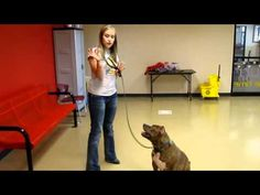 10 WEEKS TO CGC (lesson 1):  Learn how to train your dog for the Canine Good Citizen test.