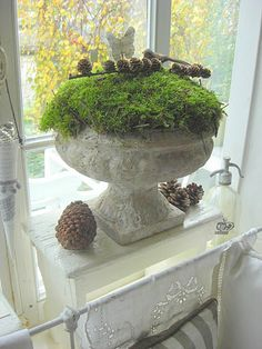 for Christmas time and throughout the winter - urn with moss and pinecones