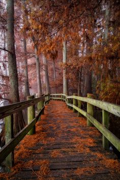 Best State Parks in Tennessee for FALL!