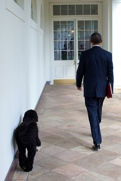 President Barack Obama and Bo, the Obama family dog, walk along the Colonnade of the White House, Sept. 10, 2010. (Official White House Photo by Pete Souza