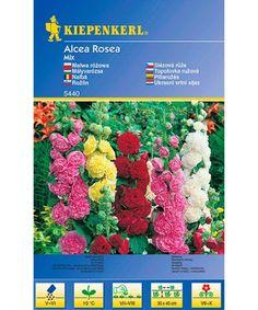 Slezová růže - směs Art, Art Background, Kunst, Performing Arts, Art Education Resources, Artworks