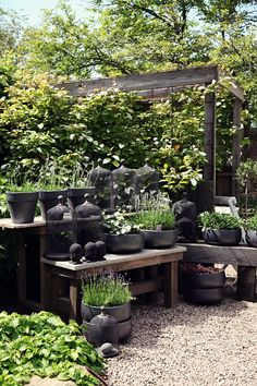 Gardening pots and containers veggie gardens for beginners,how to create a backyard garden small backyard vegetable garden,great small garden designs outdoor garden living. Garden Shop, Dream Garden, Garden Pots, Home And Garden, Pot Jardin, Climbing Vines, Black Garden, Garden Inspiration, Stil Inspiration