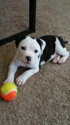 Kylo, so very cute!!