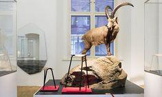 Štýrský Hradec ukazuje moderní design mezi zvířaty
