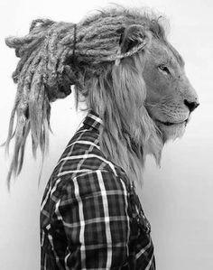 Rastafari Lion. Beautiful.