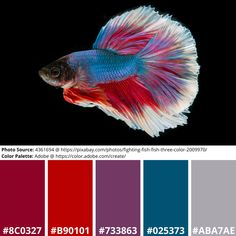 Siamese Fighting Fish Mood Board in Red, Blue, White Science Art, Science Nature, Adobe Color Wheel, Color Palette Generator, Siamese Fighting Fish, Online Coloring, Exotic Fish, Mood Boards, Design Projects