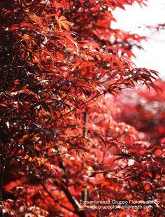 Autumn #leaf color