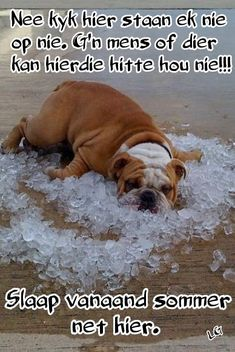 Good Night Sleep Tight, Goeie Nag, Afrikaans Quotes, Good Night Wishes, Special Quotes, Cute Quotes, Give It To Me, Humor, Sayings