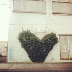 Green love. Bellingham, Washington.