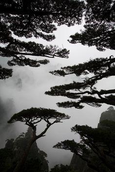 Huangshan - China
