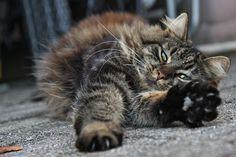 Katze, Dösend, Entspannt