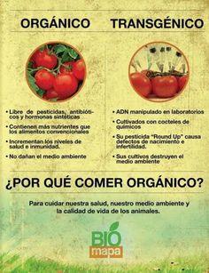 CNA: Cómo las empresas que producen alimentos transgénicos han dependido siempre…