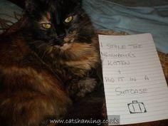 Cat Shaming | Cat Shaming