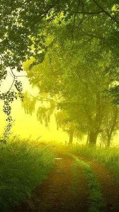 Nature-Country-Morning-Path-iPhone-6-wallpaper-ilikewallpaper_com_750.jpg 750×1.334 Pixel